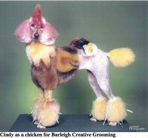 poodle-as-a-chicken