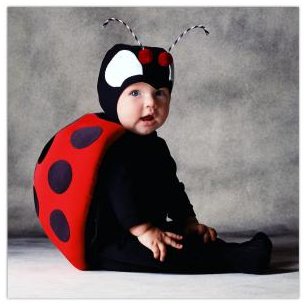 Ladybug by Tom Arma